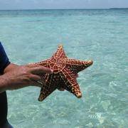 A starfish at Robert's Caye