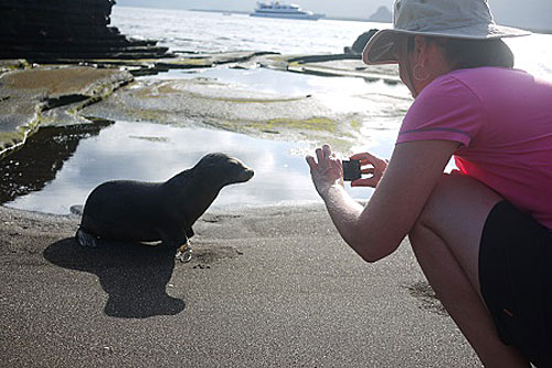 A baby sea lion is photographed