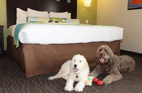 Pet Friendly La Quinta Hotels
