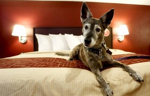 Pets are free at Red Roof Inns