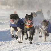 Dogsledding in Juneau, AK