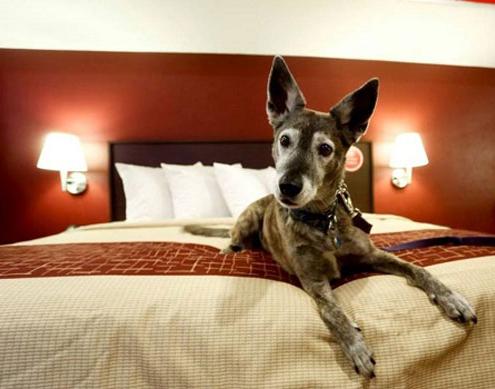 Pet-friendly hotel chains