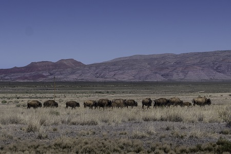 Photography Workshops in New Mexico