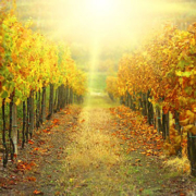 France: Walking and Wine in Provence