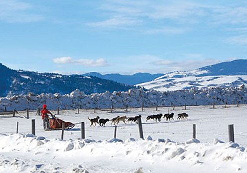 Explore Yellowstone National Park in Winter