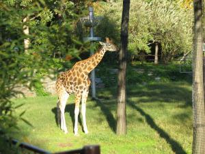 National Zoo Giraffe