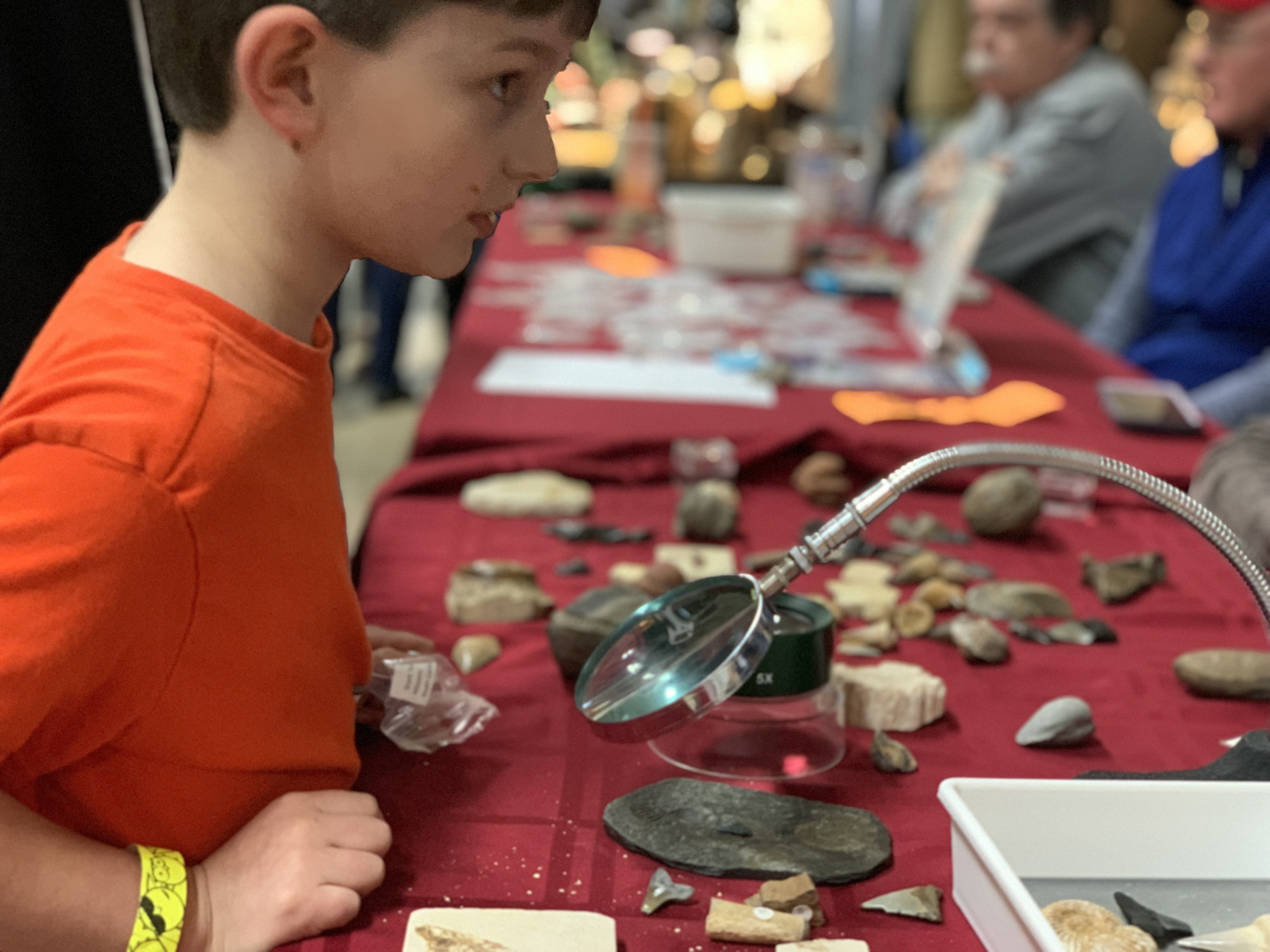Little boy looking at fossils through a magnifying glass at a rock and gem show