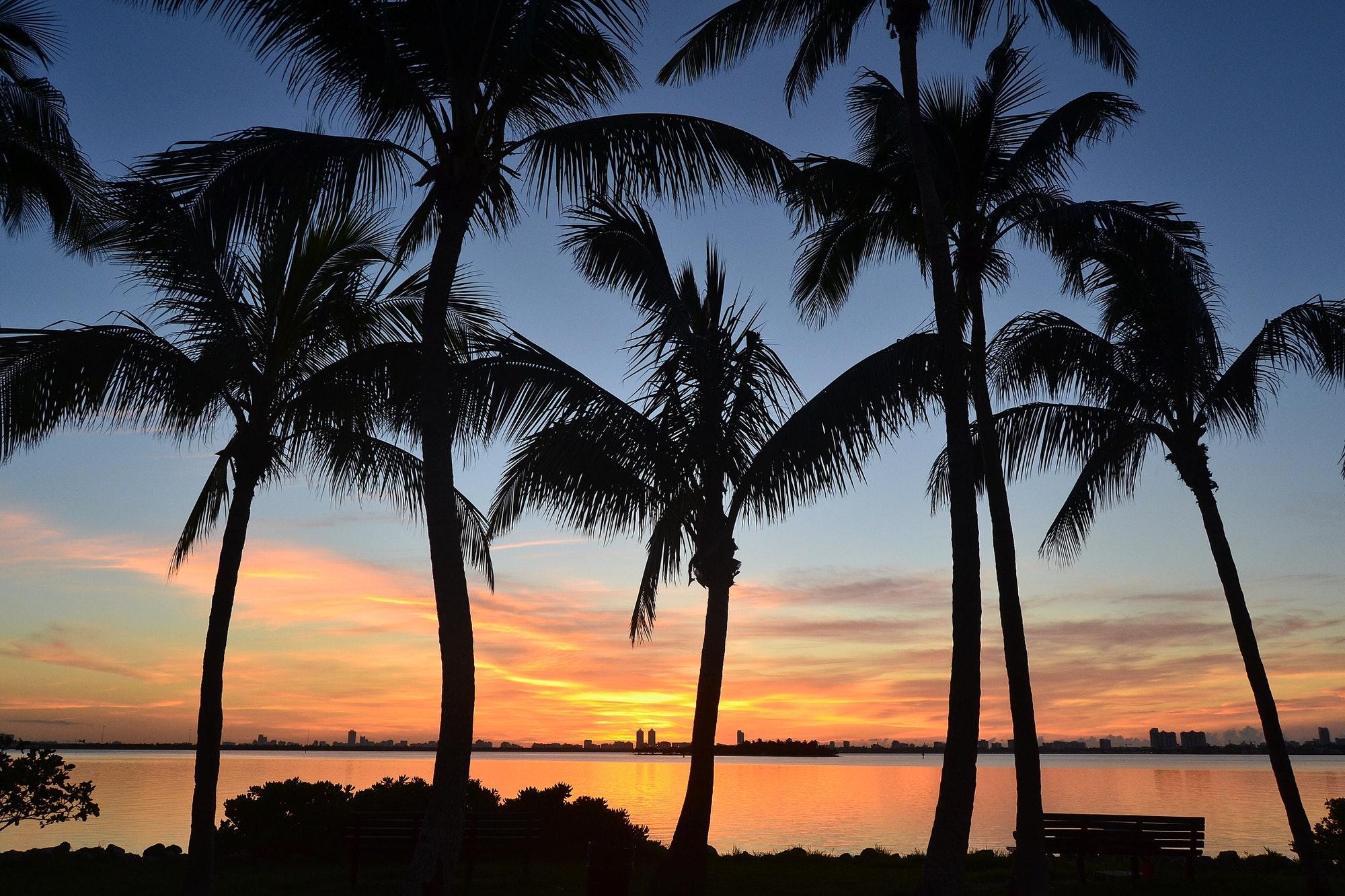 Miami Mornings