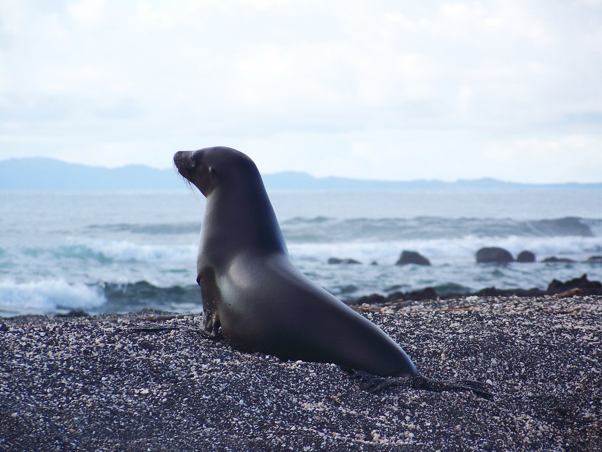 Sea lion on the Galápagos Islands