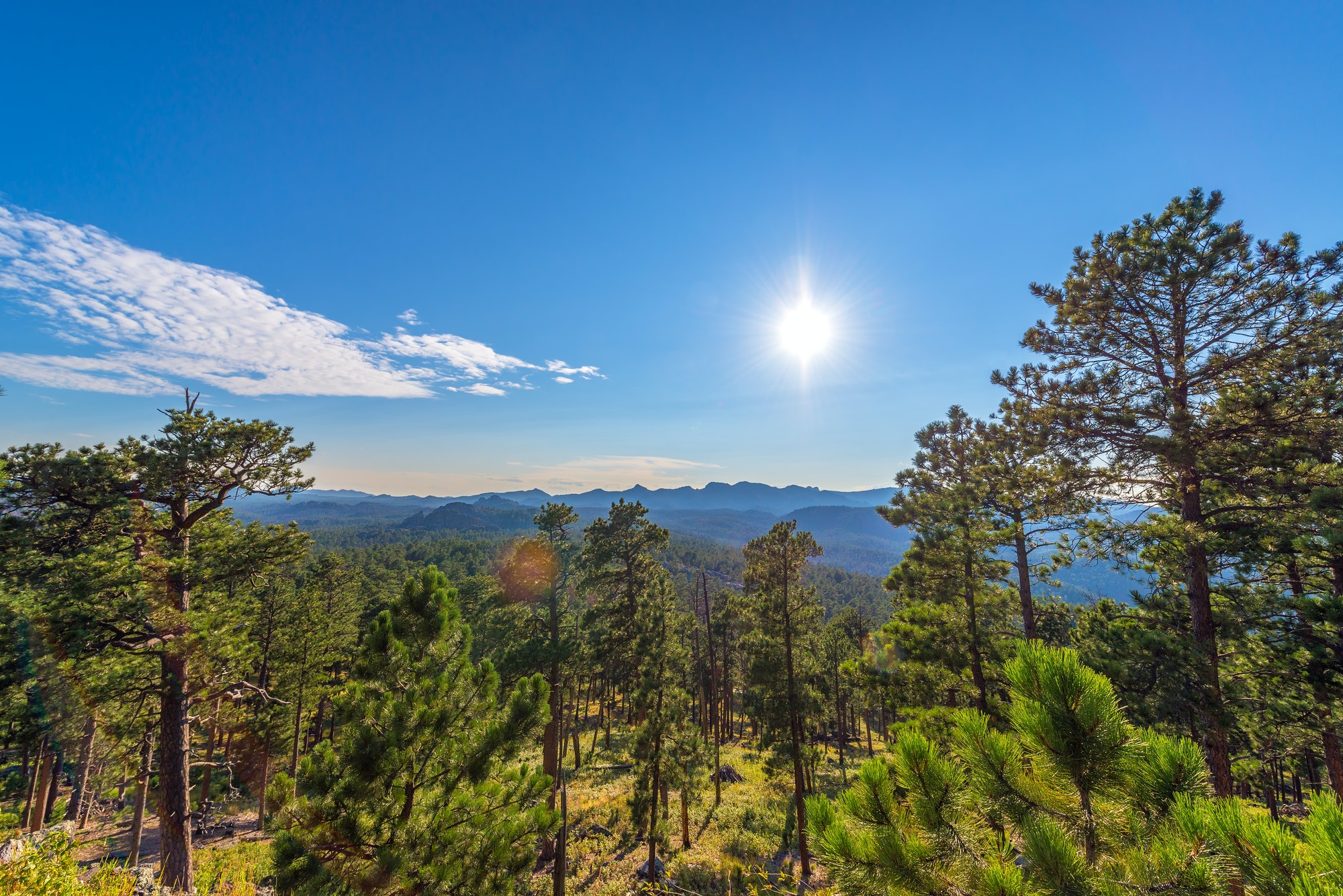 Custer State Park Landscape